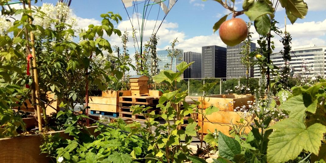 Jardinez en ville avec les Vergers Urbains