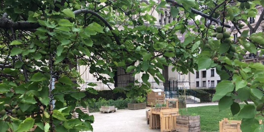 Le jardin partagé Truillot  – Paris 11