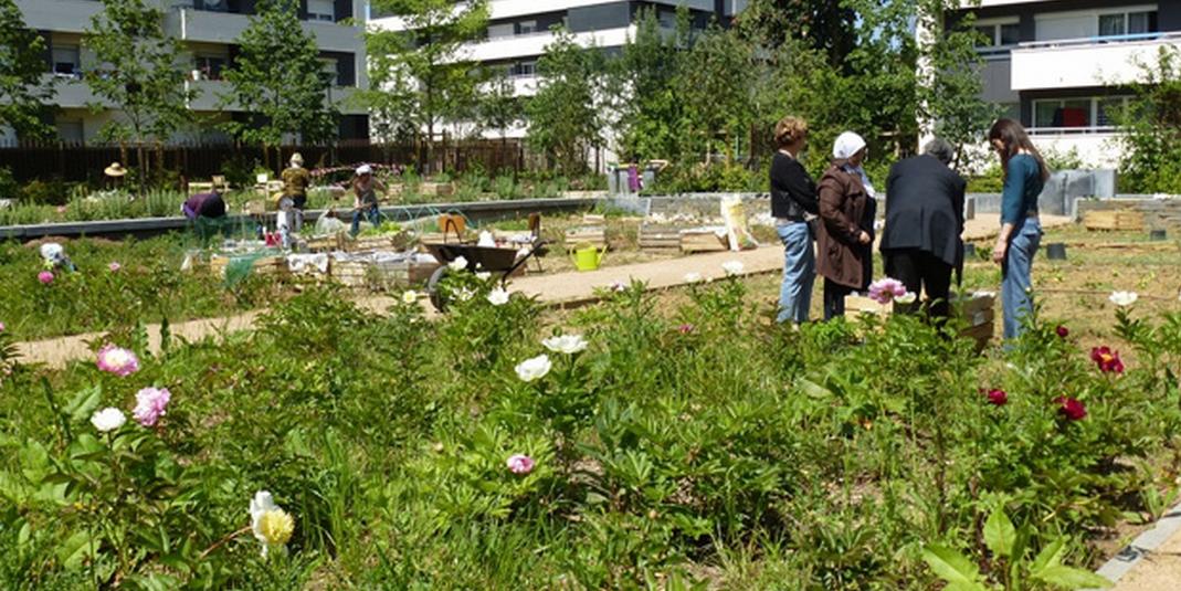 Le jardin partagé Le ver têtu – Paris 19