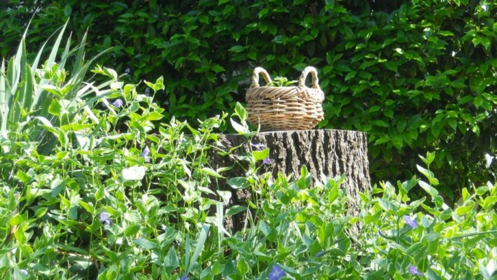 5 plantes sauvages d'Ile-de-France à cueillir au printemps et en été