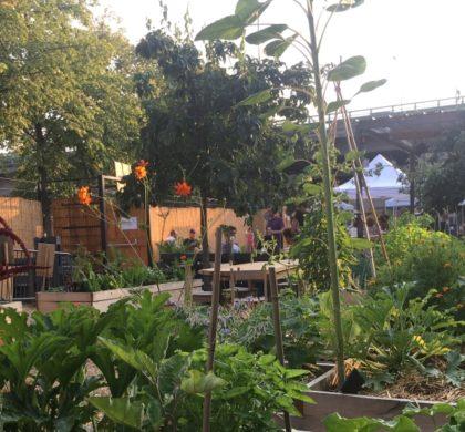 Jardin partage 21