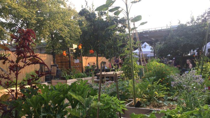 Le jardin 21 : jardin partagé et bar dans le 19ème