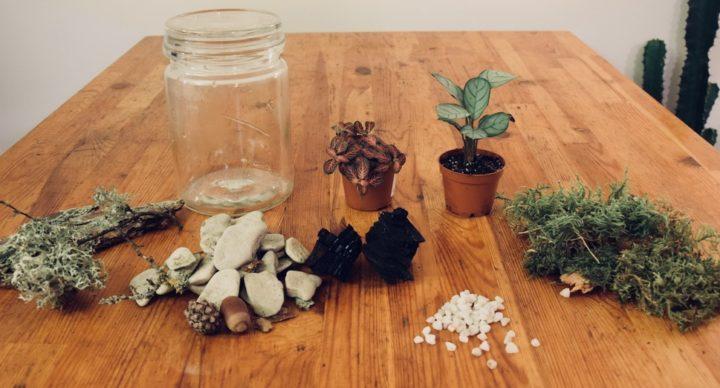 Fabriquer son terrarium pour plante
