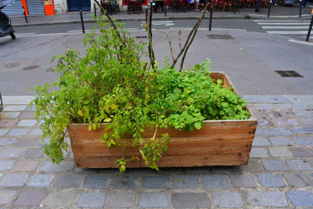permis de végétaliser Paris