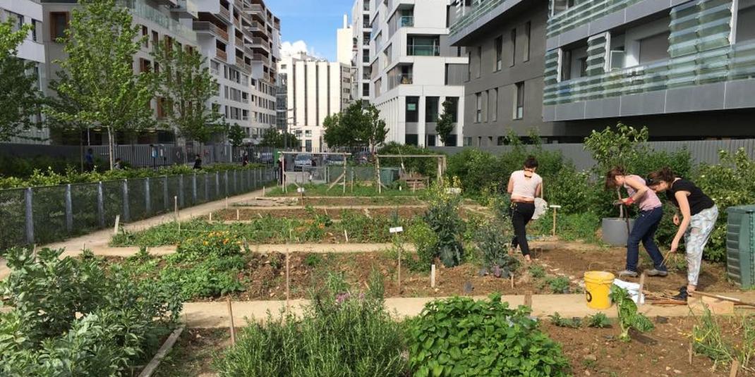 Le jardin partagé des coopains – Paris 17