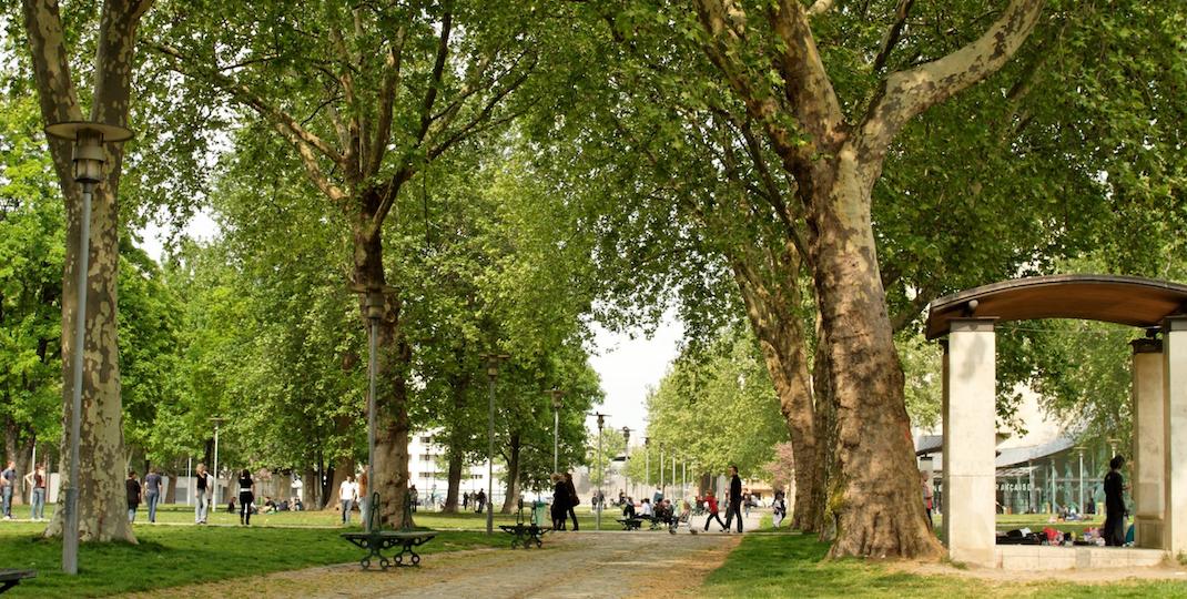 Le top 5 des arbres «banals» de la capitale